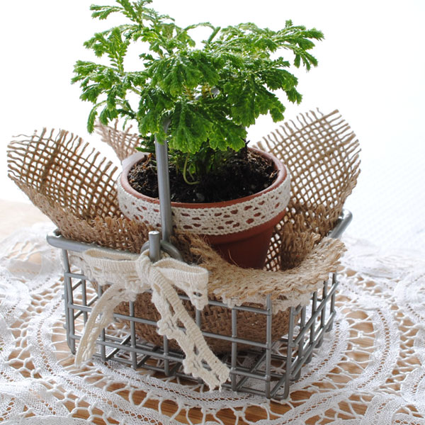 Mini potted plant party favor made with cotton lace and burlap square.