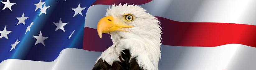 Patriotic Bald Eagle American Flag