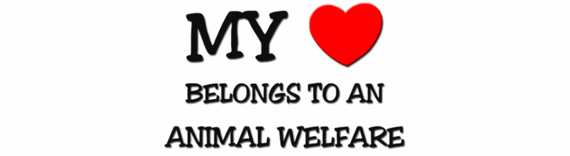 My Heart Belongs To An Animal Welfare