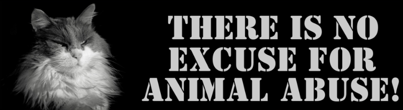 No Animal Abuse No Excuses
