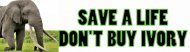 Bumper Sticker - Save An Elephants Life Dont Buy Ivory